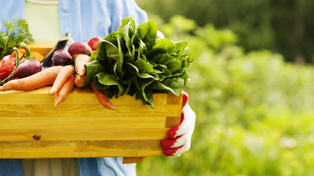 How Organic Products Made Their Way Into Business