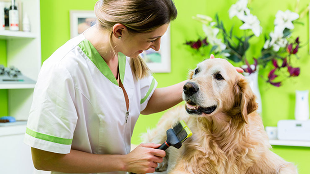Is Pet Franchise a Lucrative Business Opportunity?