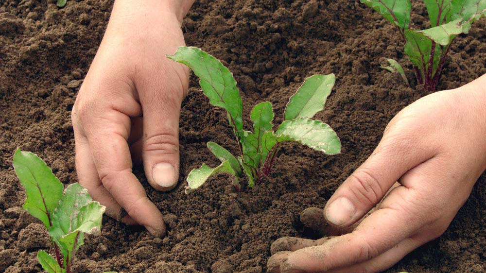 Organic agriculture, a healthy way to preserve Agro-ecosystem