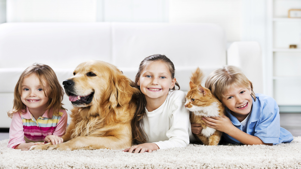 How Humanization Is Affecting The Pet Industry