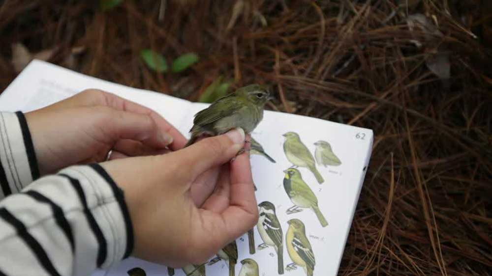 Interactive course in basic ornithology to commence in Pune