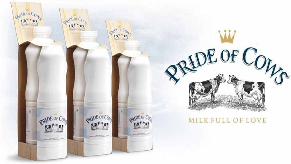 Pride of Cows Aims for Purity