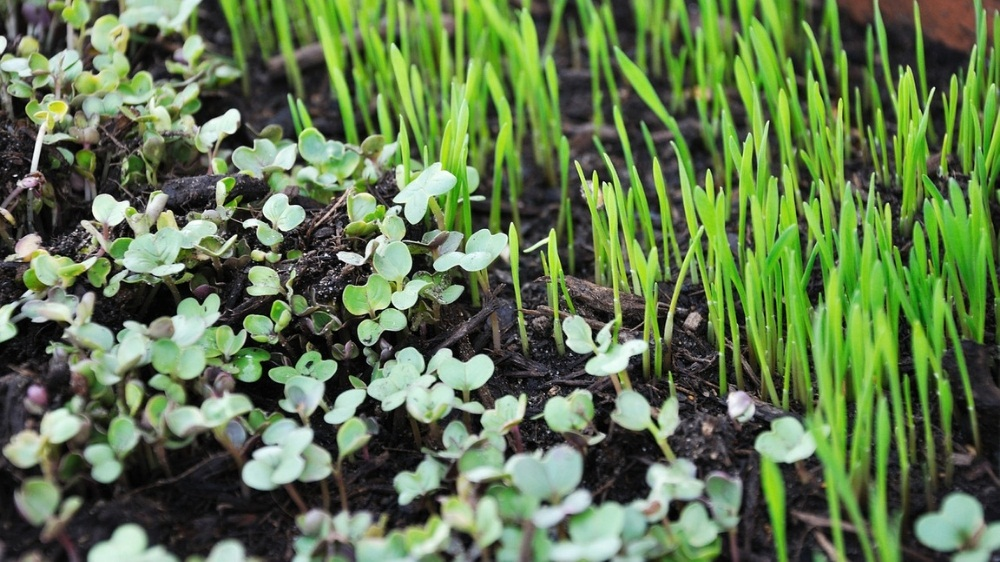This Brand is The First To Grow Microgreens With Insulation Technology in Mumbai