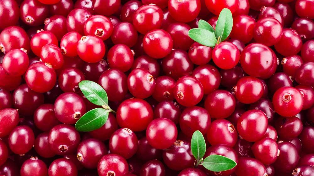 US Cranberries explores Indian market