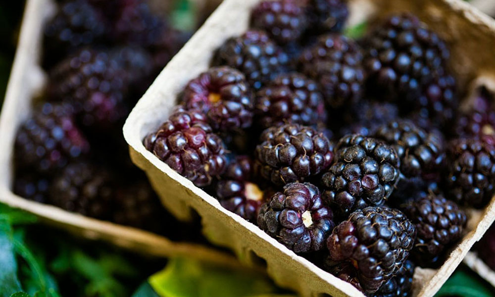 The wave of healthy foods