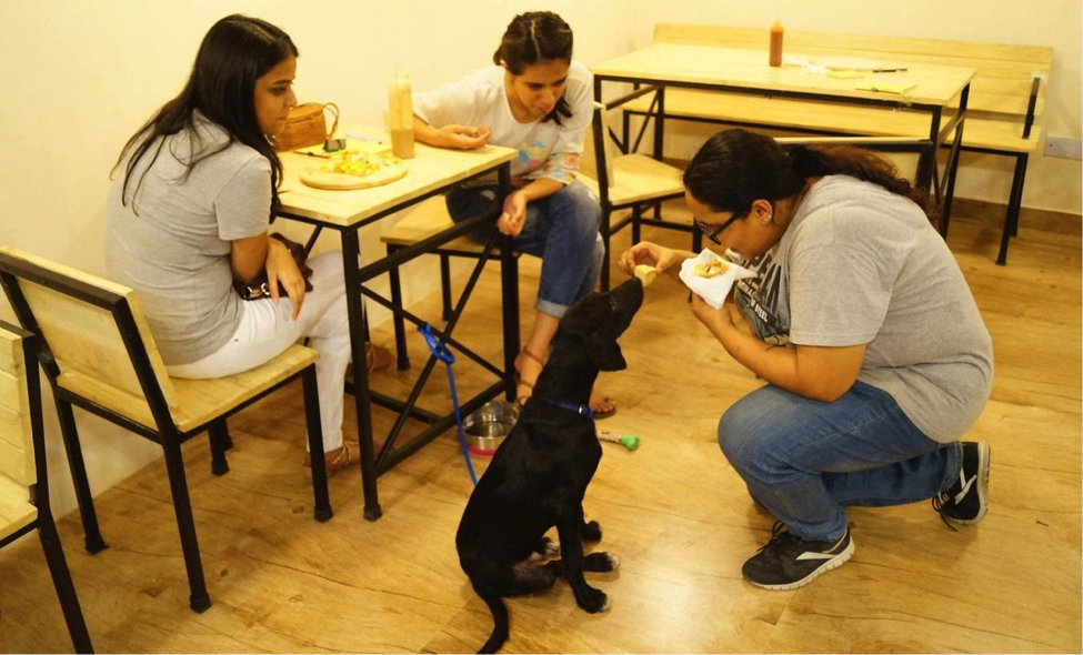 How-this-cafe-is-catching-on-CSR-with-a-pet-cafe