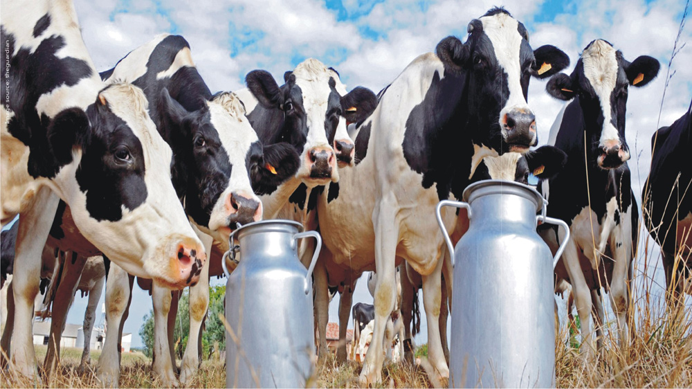 Challenges Faced By The Indian Dairy Sector