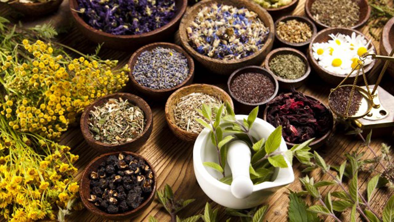 why-medicinal-herbs-can-be-a-lucrative-business-idea