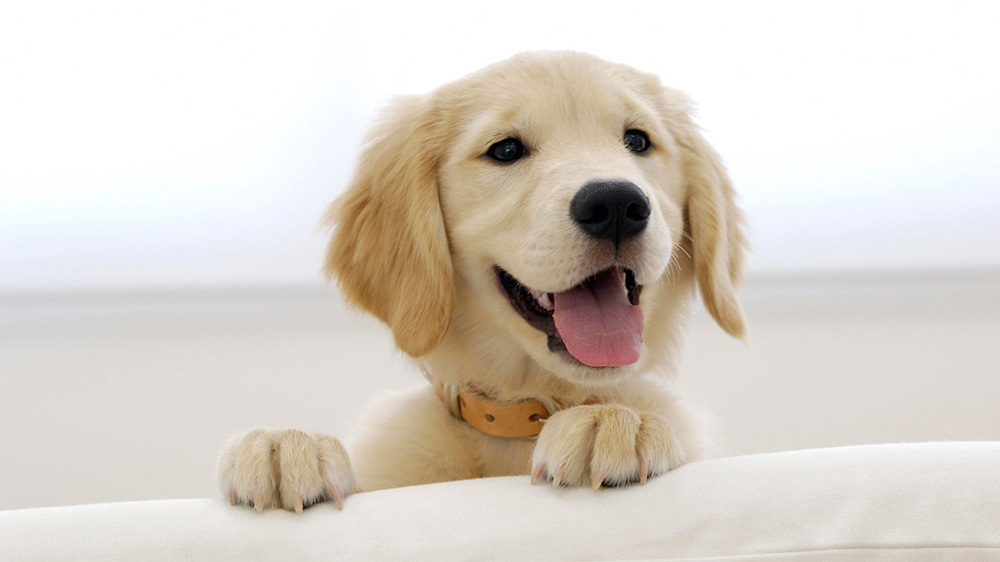 Love Animals? Here Is The List Of Business Opportunities You Can Consider In Pet Care Industry