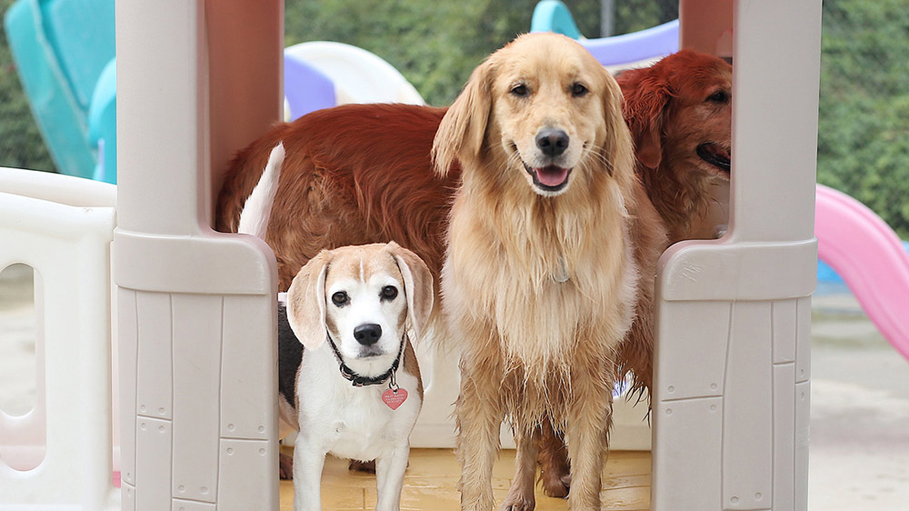 Things To Consider For Starting A Dog Daycare Business