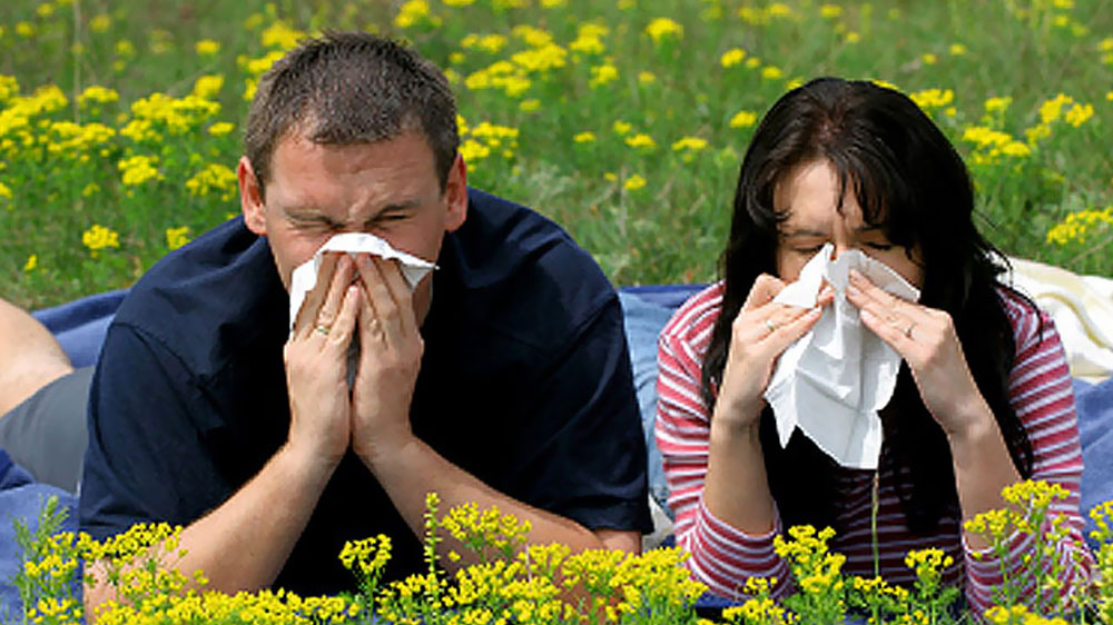 Keep-seasonal-allergies-and-hay-fever-at-bay-with-Ayurveda