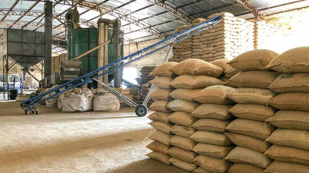 Govt mandates jute packaging for all food grains