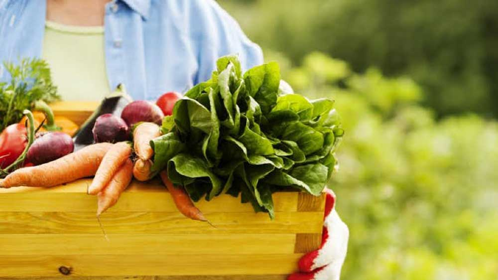 India's Export Of Organic Food Products Up 39% In 2017-18
