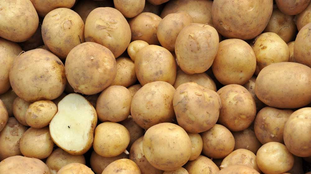 ITC's Technico signs pact with James Hutton Institute to source new potatoes varieties