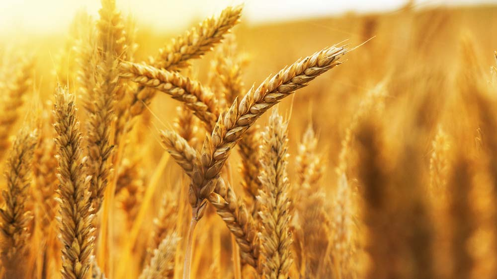 IIMA's CIIE to launch India's first Food and Agri-business Accelerator program