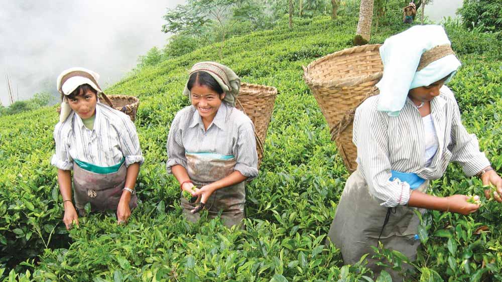 Teabox raises fund