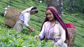 Darjeeling Tea fails to spread its aroma on ecommerce's platform