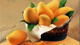Indian mango grower and mango farmers hope to get good output in 2017