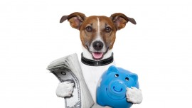 Partner for profits in pet biz