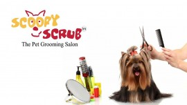Scoopy Scrub plans expansion